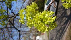 Kurz poznávání stromů akeřů vbezlistém stavu