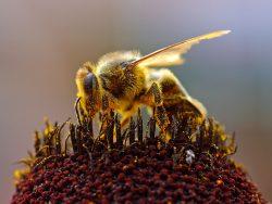 Ochrana včel, zvěře, vodních organismů adalších necílových organismů připoužívání přípravků